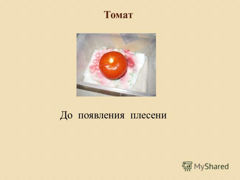 Томат До появления плесени