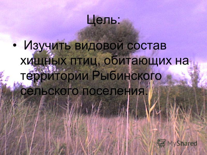 Цель: Изучить видовой состав хищных птиц, обитающих на территории Рыбинского сельского поселения.