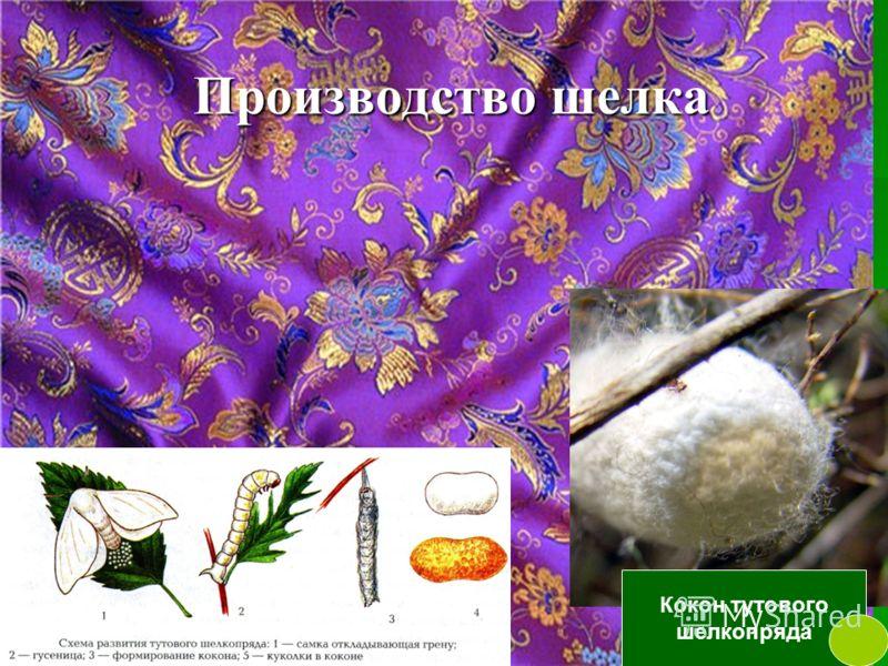 Производство шелка Кокон тутового шелкопряда