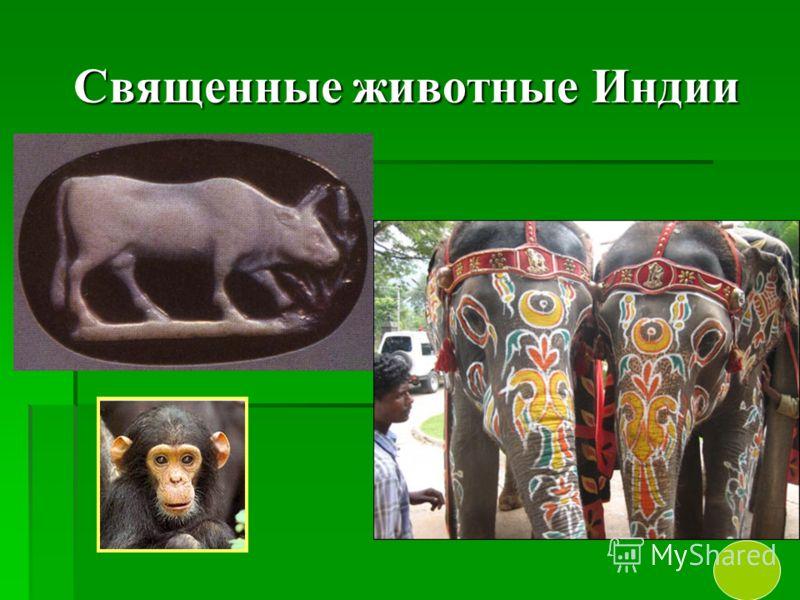 Священные животные Индии