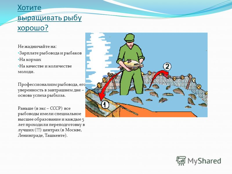 Хотите выращивать рыбу хорошо? Не жадничайте на: Зарплате рыбовода и рыбаков На кормах На качестве и количестве молоди. Профессионализм рыбовода, его уверенность в завтрашнем дне – основа успеха рыбхоза. Раньше (в экс – СССР) все рыбоводы имели специ