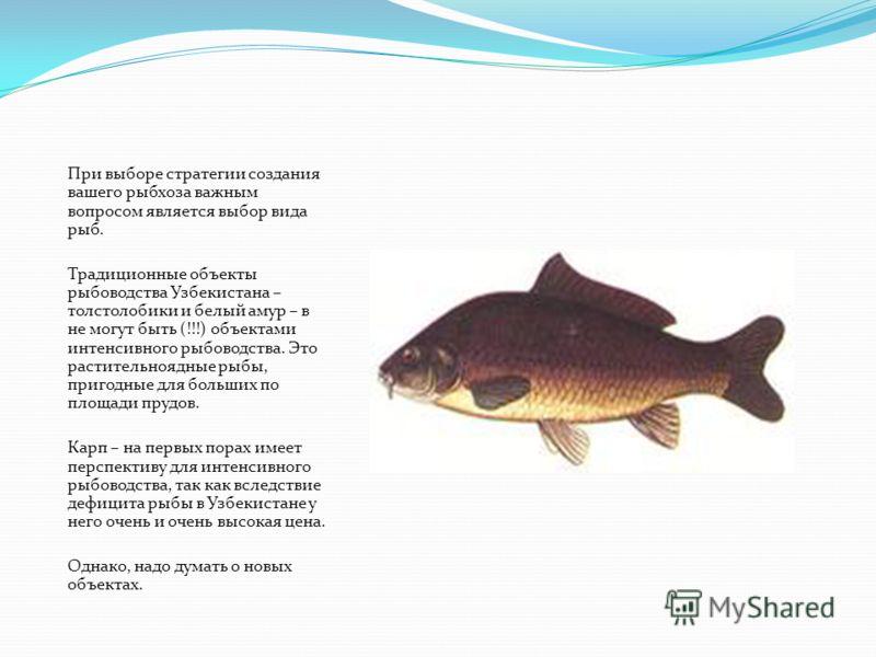 При выборе стратегии создания вашего рыбхоза важным вопросом является выбор вида рыб. Традиционные объекты рыбоводства Узбекистана – толстолобики и белый амур – в не могут быть (!!!) объектами интенсивного рыбоводства. Это растительноядные рыбы, приг