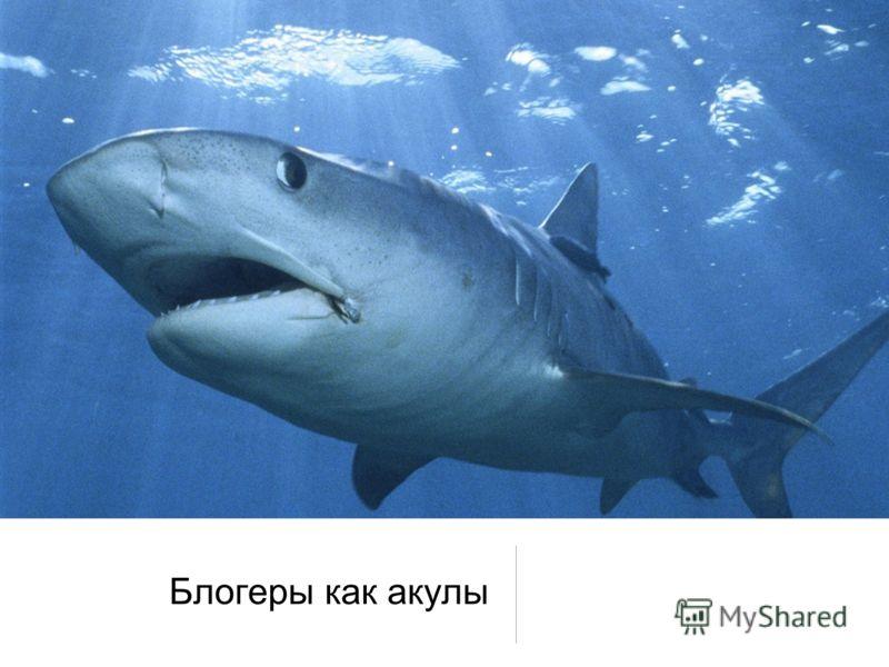 Блогеры как акулы