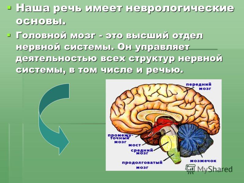 Наша речь имеет неврологические основы. Наша речь имеет неврологические основы. Головной мозг - это высший отдел нервной системы. Он управляет деятельностью всех структур нервной системы, в том числе и речью. Головной мозг - это высший отдел нервной