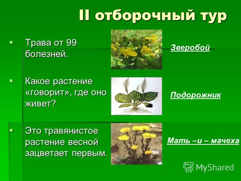 II отборочный тур Трава от 99 болезней. Трава от 99 болезней. Какое растение «говорит», где оно живет? Какое растение «говорит», где оно живет? Это травянистое растение весной зацветает первым. Это травянистое растение весной зацветает первым. Звероб