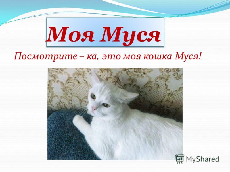 Моя Муся Посмотрите – ка, это моя кошка Муся!