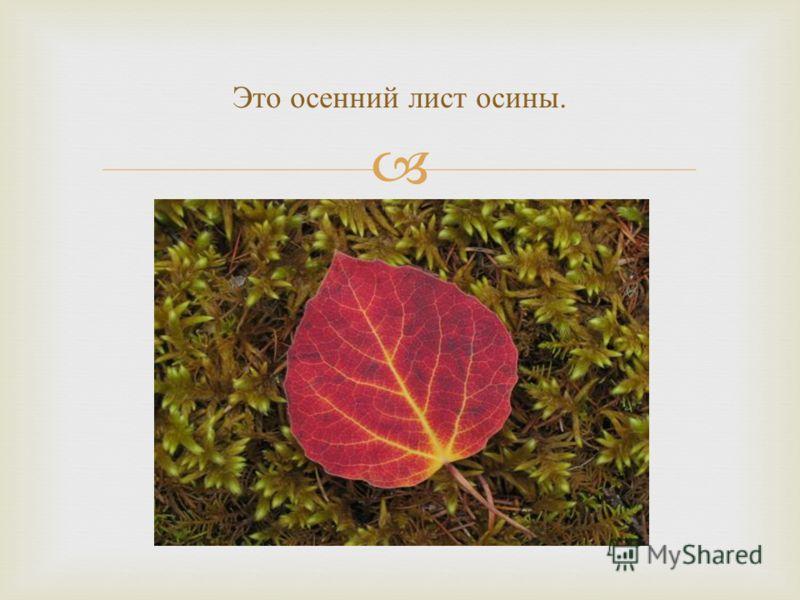 Это осенний лист осины.