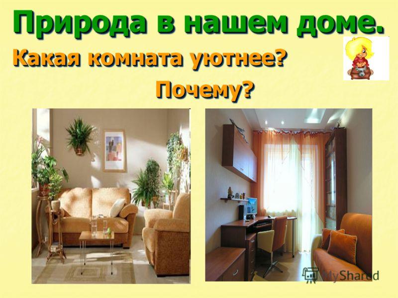 Природа в нашем доме. Какая комната уютнее? Почему? Почему? Природа в нашем доме. Какая комната уютнее? Почему? Почему?