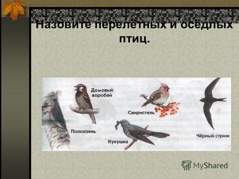 Назовите перелётных и осёдлых птиц.