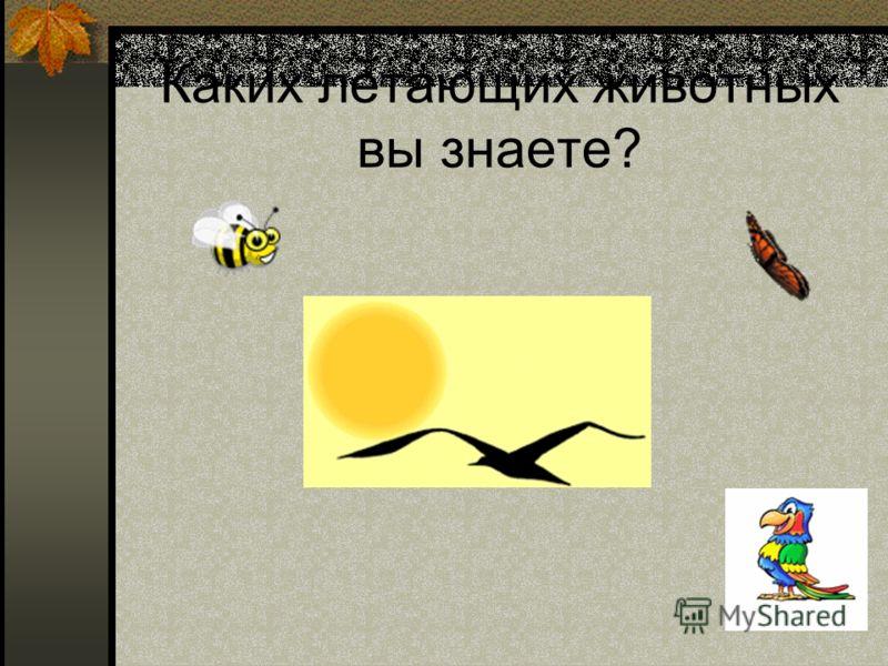 Каких летающих животных вы знаете?