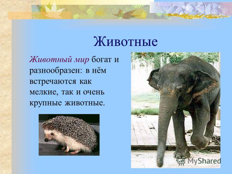 Животные Животный мир богат и разнообразен: в нём встречаются как мелкие, так и очень крупные животные.