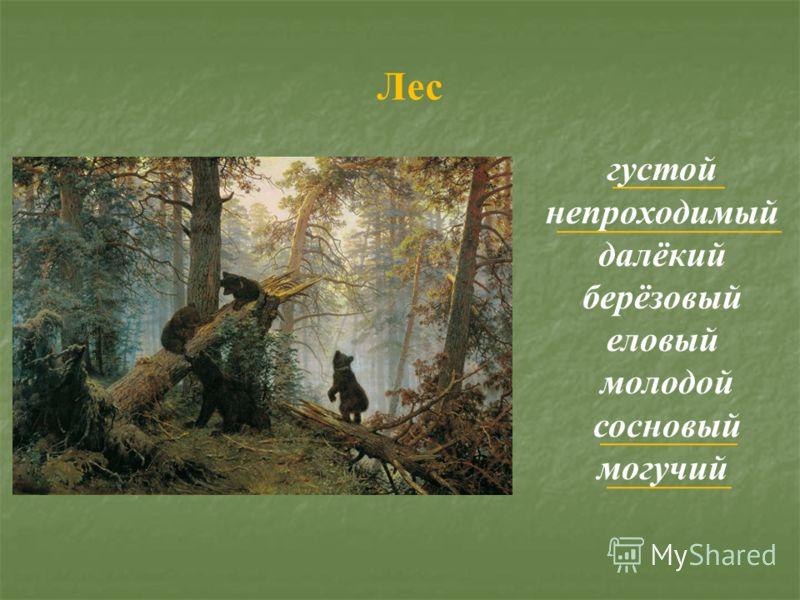 густой непроходимый далёкий берёзовый еловый молодой сосновый могучий Лес
