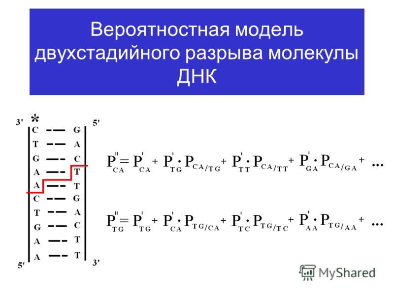 Вероятностная модель двухстадийного разрыва молекулы ДНК