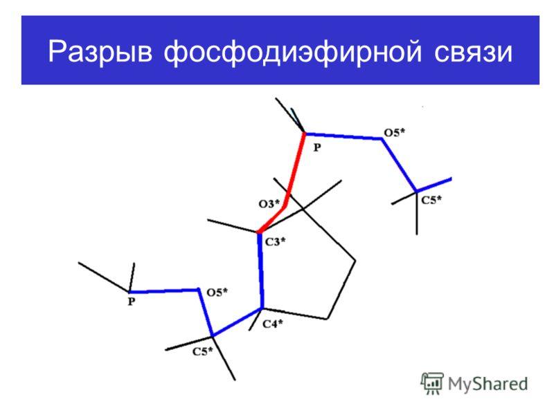 Разрыв фосфодиэфирной связи