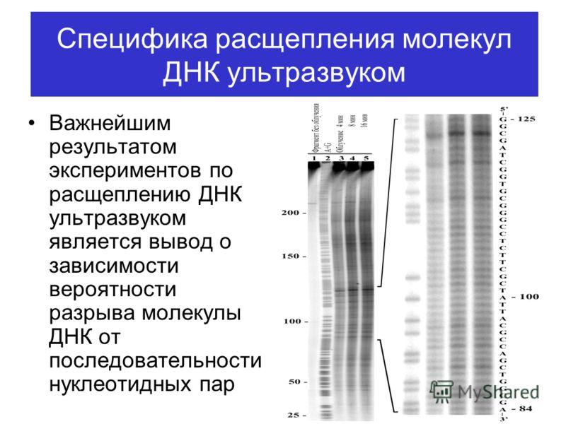 Специфика расщепления молекул ДНК ультразвуком Важнейшим результатом экспериментов по расщеплению ДНК ультразвуком является вывод о зависимости вероятности разрыва молекулы ДНК от последовательности нуклеотидных пар