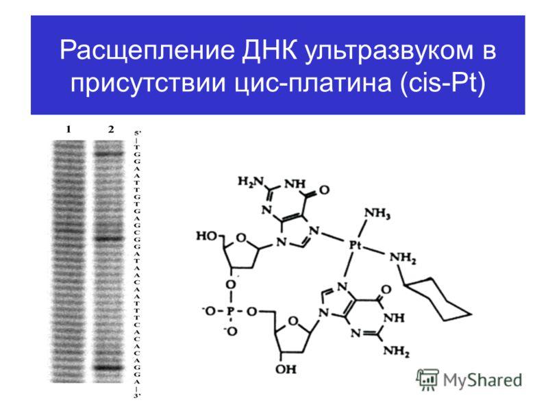 Расщепление ДНК ультразвуком в присутствии цис-платина (cis-Pt)
