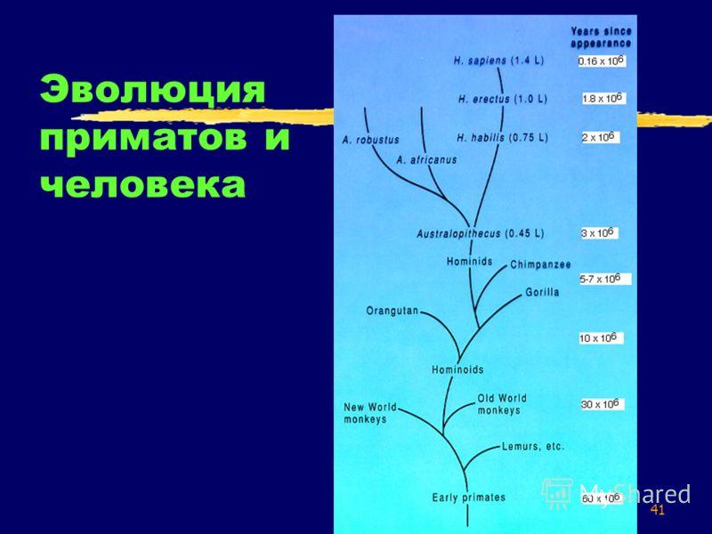 41 Эволюция приматов и человека