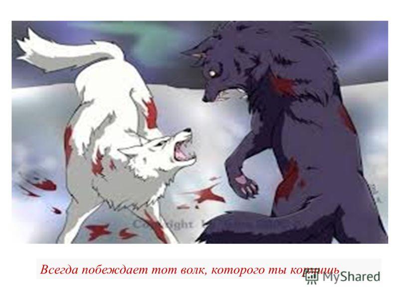 Всегда побеждает тот волк, которого ты кормишь