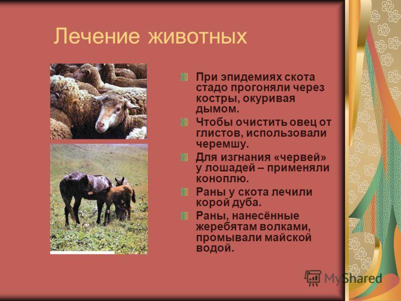 Лечение животных При эпидемиях скота стадо прогоняли через костры, окуривая дымом. Чтобы очистить овец от глистов, использовали черемшу. Для изгнания «червей» у лошадей – применяли коноплю. Раны у скота лечили корой дуба. Раны, нанесённые жеребятам