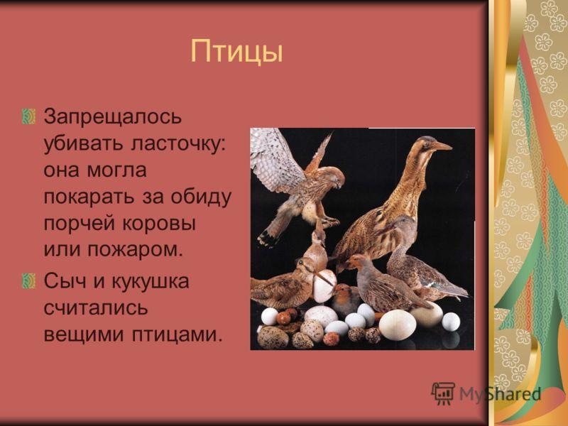 Птицы Запрещалось убивать ласточку: она могла покарать за обиду порчей коровы или пожаром. Сыч и кукушка считались вещими птицами.