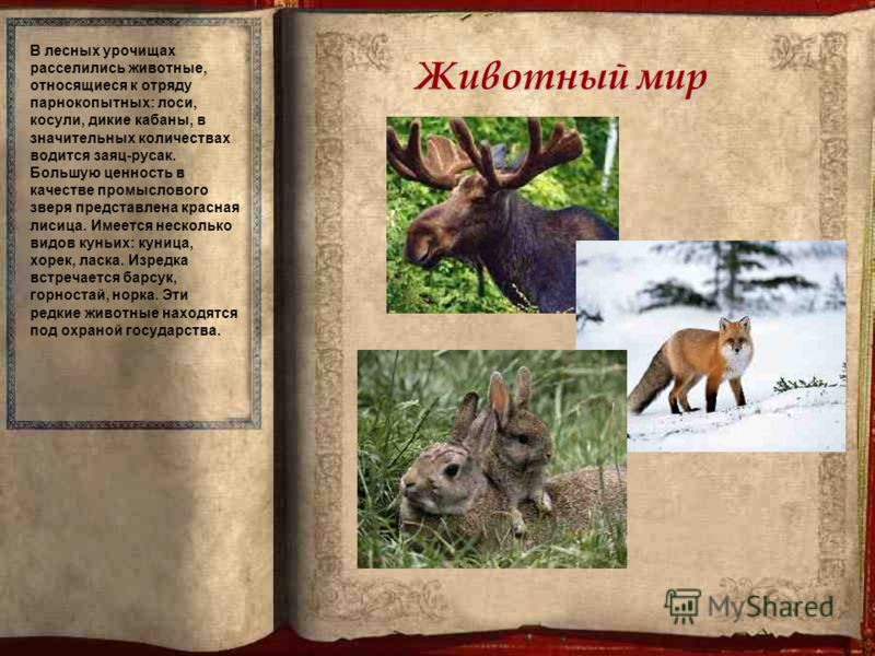 Животный мир В лесных урочищах расселились животные, относящиеся к отряду парнокопытных: лоси, косули, дикие кабаны, в значительных количествах водится заяц-русак. Большую ценность в качестве промыслового зверя представлена красная лисица. Имеется не