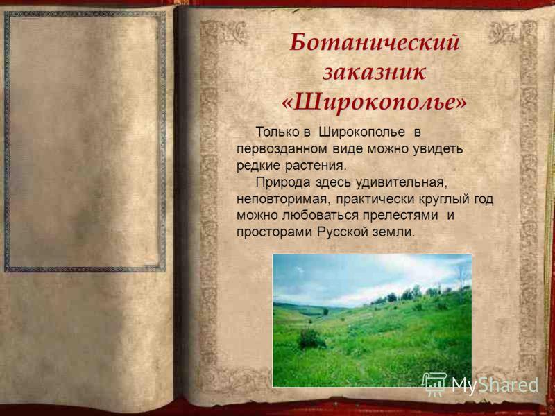 Ботанический заказник «Широкополье» Только в Широкополье в первозданном виде можно увидеть редкие растения. Природа здесь удивительная, неповторимая, практически круглый год можно любоваться прелестями и просторами Русской земли.