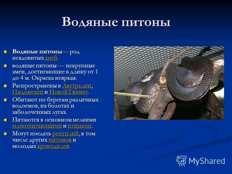 Водяные питоны Водяные питоны род неядовитых змей. Водяные питоны род неядовитых змей.змей водяные питоны некрупные змеи, достигающие в длину от 1 до 4 м. Окраска неяркая. водяные питоны некрупные змеи, достигающие в длину от 1 до 4 м. Окраска неярка
