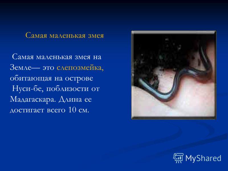 Самая маленькая змея Самая маленькая змея на Земле это слепозмейка, обитающая на острове Нуси-бе, поблизости от Мадагаскара. Длина ее достигает всего 10 см.
