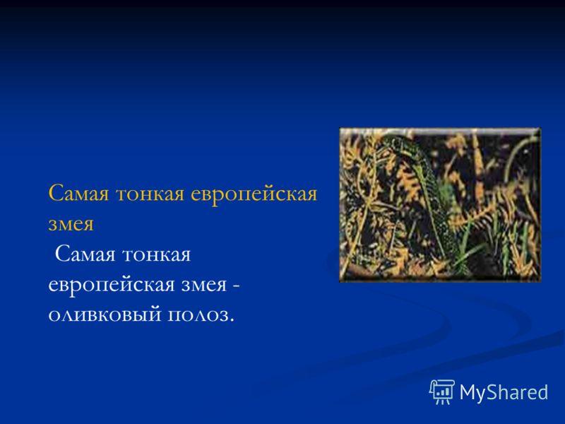 Самая тонкая европейская змея Самая тонкая европейская змея - оливковый полоз.