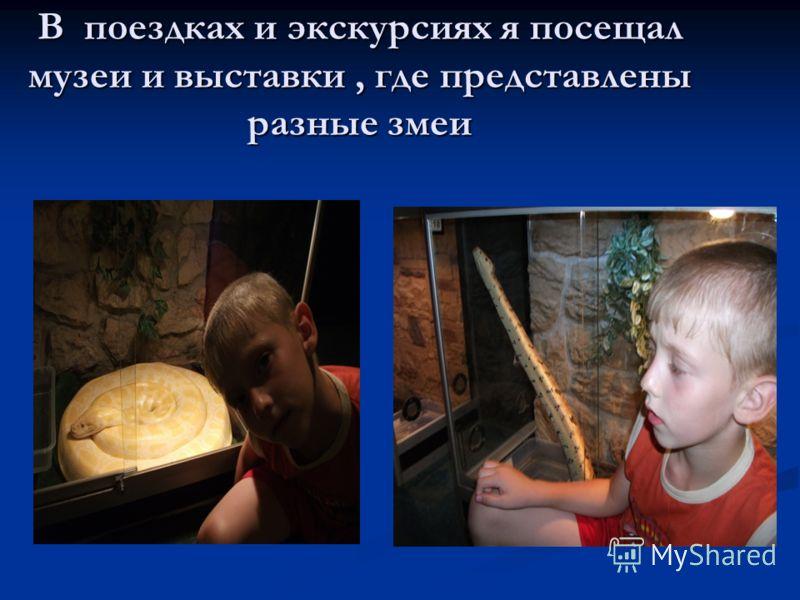 В поездках и экскурсиях я посещал музеи и выставки, где представлены разные змеи