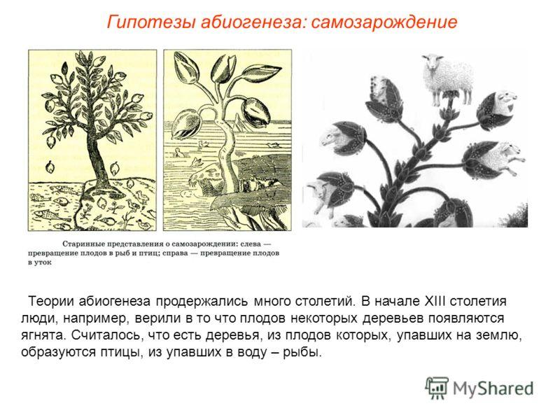 Теории абиогенеза продержались много столетий. В начале ХIII столетия люди, например, верили в то что плодов некоторых деревьев появляются ягнята. Считалось, что есть деревья, из плодов которых, упавших на землю, образуются птицы, из упавших в воду –