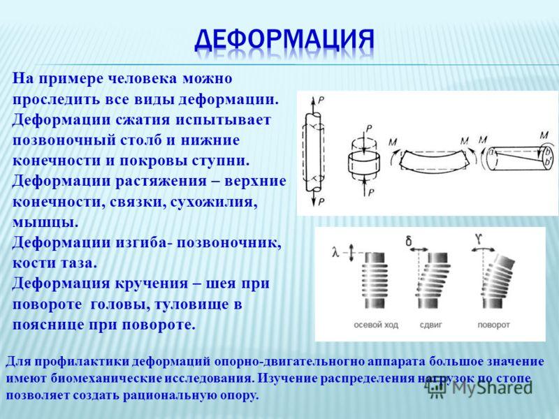 На примере человека можно проследить все виды деформации. Деформации сжатия испытывает позвоночный столб и нижние конечности и покровы ступни. Деформации растяжения – верхние конечности, связки, сухожилия, мышцы. Деформации изгиба- позвоночник, кости