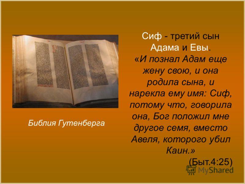 Сиф - третий сын Адама и Евы. «И познал Адам еще жену свою, и она родила сына, и нарекла ему имя: Сиф, потому что, говорила она, Бог положил мне другое семя, вместо Авеля, которого убил Каин.» (Быт.4:25) Библия Гутенберга