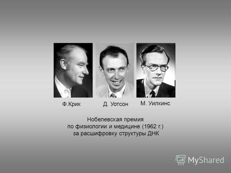 Нобелевская премия по физиологии и медицине (1962 г.) за расшифровку структуры ДНК Ф.КрикД. Уотсон М. Уилкинс