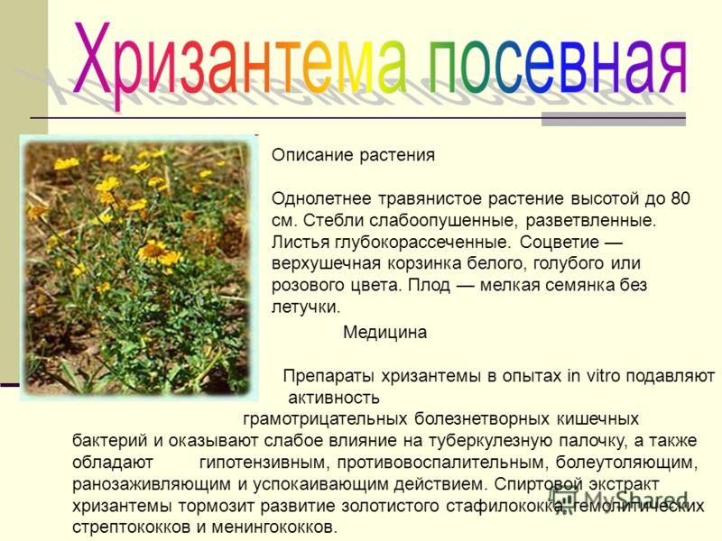 Описание растения Однолетнее травянистое растение высотой до 80 см. Стебли слабоопушенные, разветвленные. Листья глубокорассеченные. Соцветие верхушечная корзинка белого, голубого или розового цвета. Плод мелкая семянка без летучки. Медицина Препарат