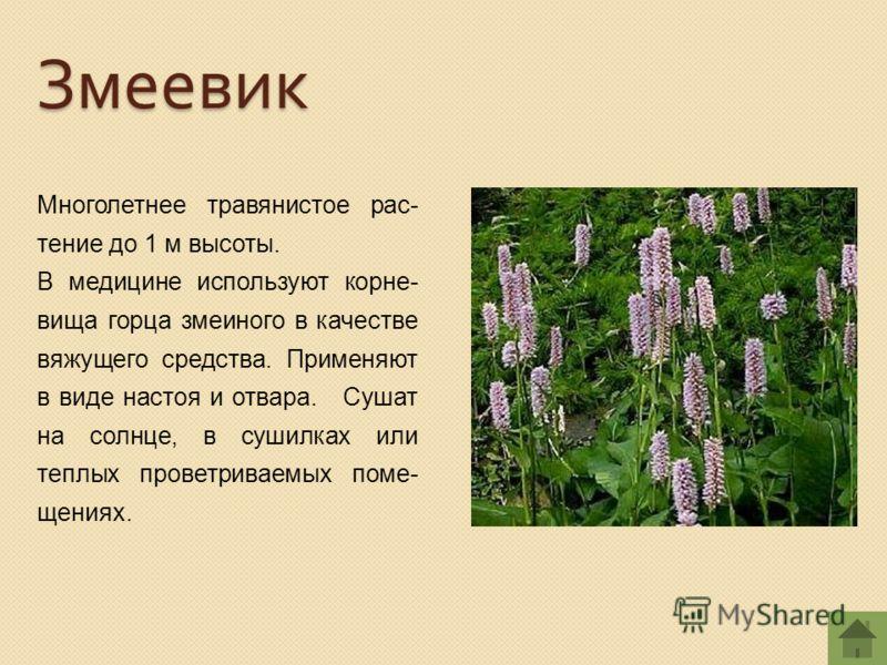 Многолетнее травянистое рас- тение до 1 м высоты. В медицине используют корне- вища горца змеиного в качестве вяжущего средства. Применяют в виде настоя и отвара. Сушат на солнце, в сушилках или теплых проветриваемых поме- щениях. Змеевик
