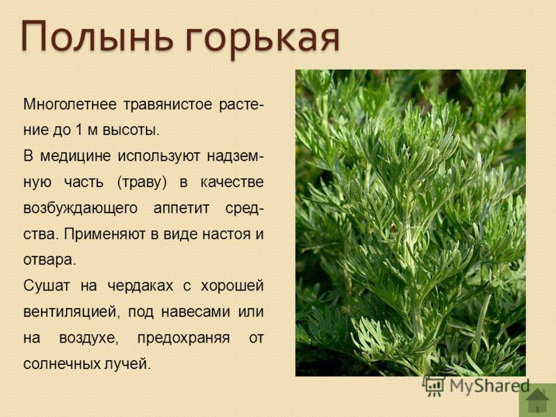 Многолетнее травянистое расте- ние до 1 м высоты. В медицине используют надзем- ную часть (траву) в качестве возбуждающего аппетит сред- ства. Применяют в виде настоя и отвара. Сушат на чердаках с хорошей вентиляцией, под навесами или на воздухе, пре