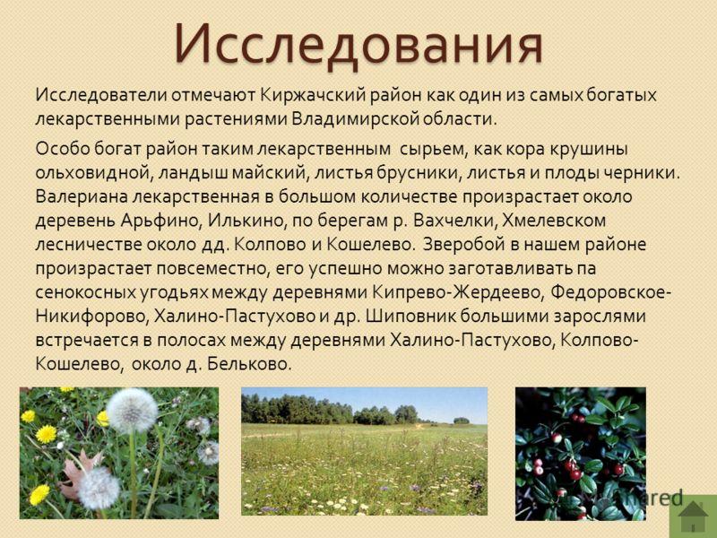 Исследования Исследователи отмечают Киржачский район как один из самых богатых лекарственными растениями Владимирской области. Особо богат район таким лекарственным сырьем, как кора крушины ольховидной, ландыш майский, листья брусники, листья и плоды