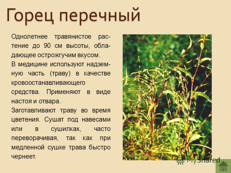 Однолетнее травянистое рас- тение до 90 см высоты, обла- дающее острожгучим вкусом. В медицине используют надзем- ную часть (траву) в качестве кровоостанавливающего средства. Применяют в виде настоя и отвара. Заготавливают траву во время цветения. Су