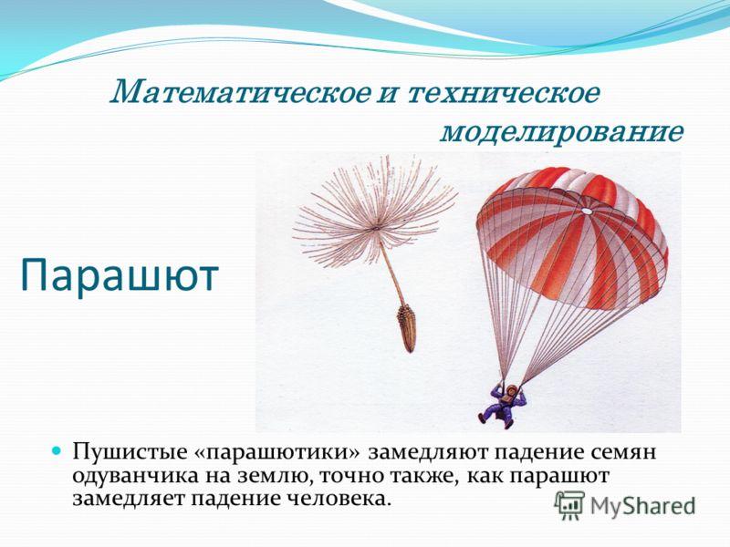 Парашют Пушистые «парашютики» замедляют падение семян одуванчика на землю, точно также, как парашют замедляет падение человека. Математическое и техническое моделирование