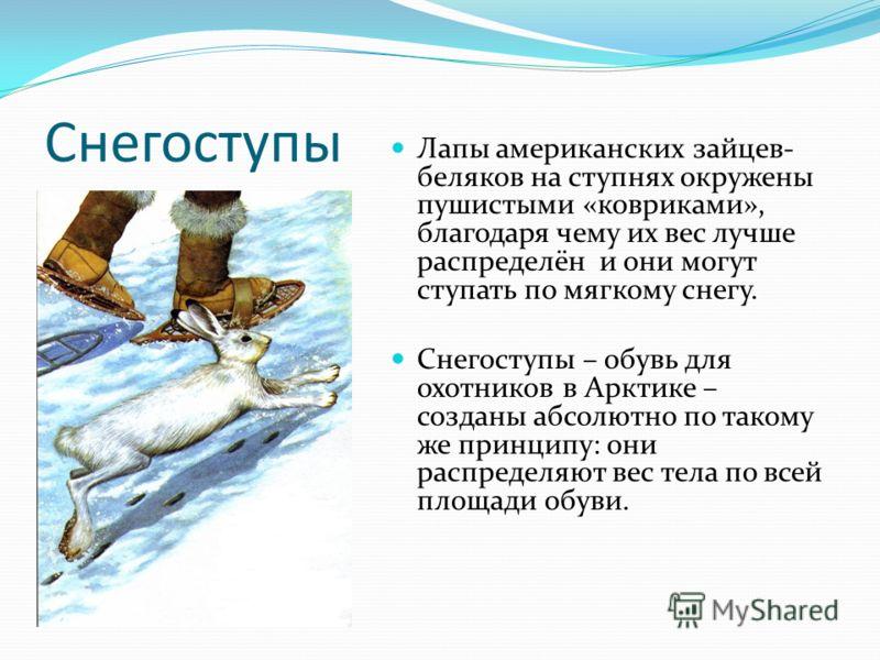 Снегоступы Лапы американских зайцев- беляков на ступнях окружены пушистыми «ковриками», благодаря чему их вес лучше распределён и они могут ступать по мягкому снегу. Снегоступы – обувь для охотников в Арктике – созданы абсолютно по такому же принципу