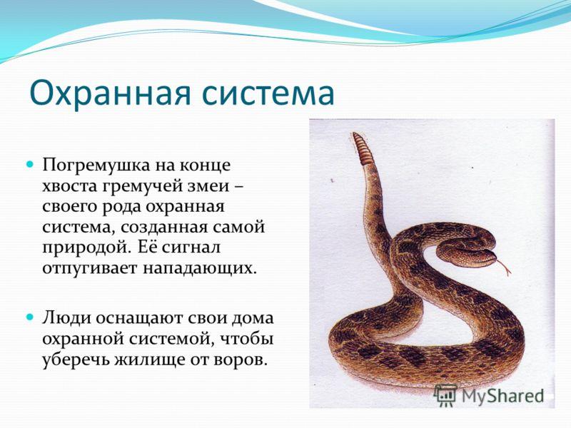 Охранная система Погремушка на конце хвоста гремучей змеи – своего рода охранная система, созданная самой природой. Её сигнал отпугивает нападающих. Люди оснащают свои дома охранной системой, чтобы уберечь жилище от воров.
