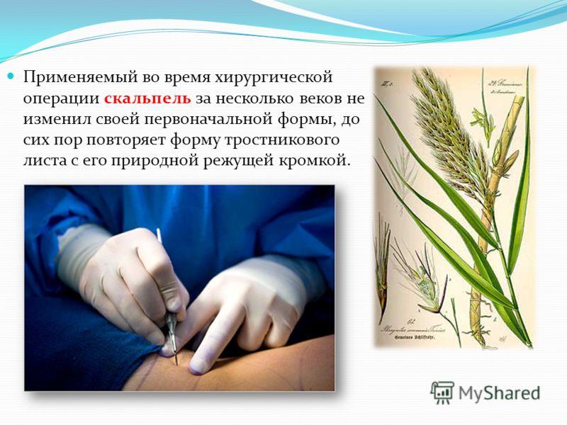 Применяемый во время хирургической операции скальпель за несколько веков не изменил своей первоначальной формы, до сих пор повторяет форму тростникового листа с его природной режущей кромкой.