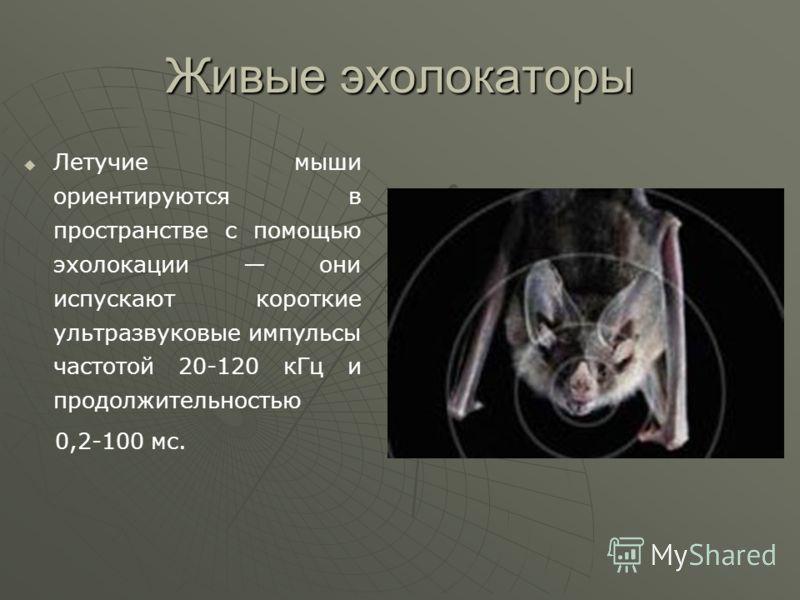 Живые эхолокаторы Летучие мыши ориентируются в пространстве с помощью эхолокации они испускают короткие ультразвуковые импульсы частотой 20-120 кГц и продолжительностью 0,2-100 мс.