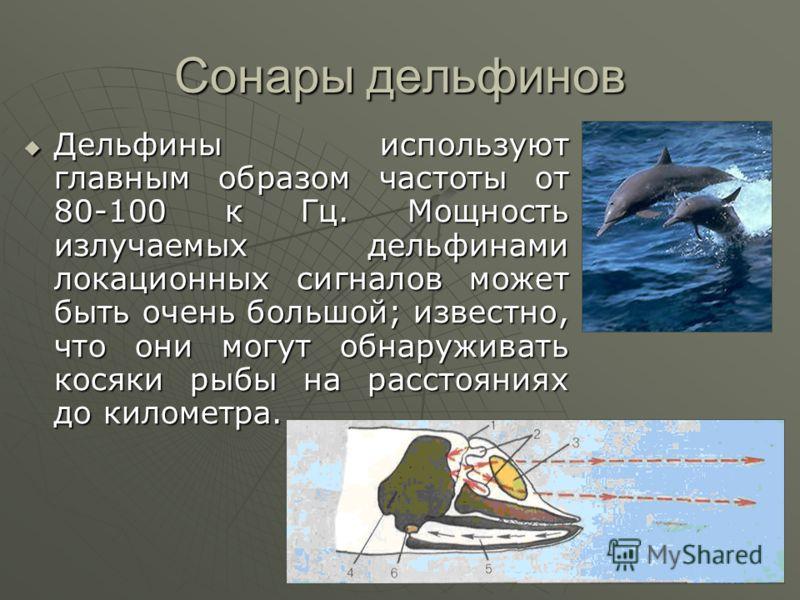 Сонары дельфинов Дельфины используют главным образом частоты от 80-100 к Гц. Мощность излучаемых дельфинами локационных сигналов может быть очень большой; известно, что они могут обнаруживать косяки рыбы на расстояниях до километра. Дельфины использу