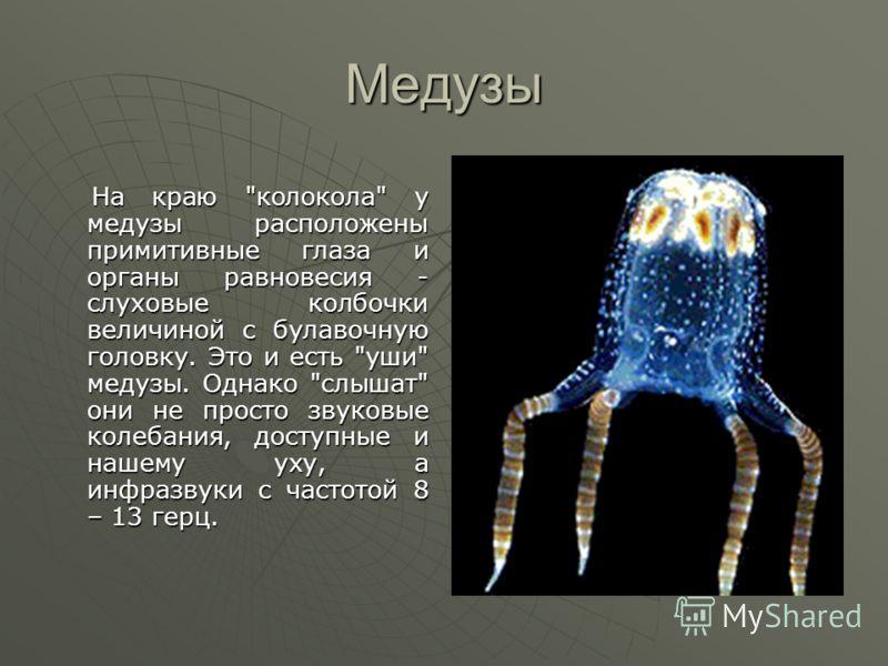Медузы На краю