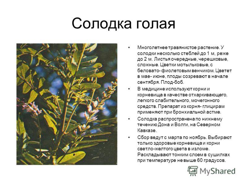 Солодка голая Многолетнее травянистое растение. У солодки несколько стеблей до 1 м, реже до 2 м. Листья очередные, черешковые, сложные. Цветки мотыльковые, с беловато- фиолетовым венчиком. Цветет в мае- июне, плоды созревают в начале сентября. Плод-б