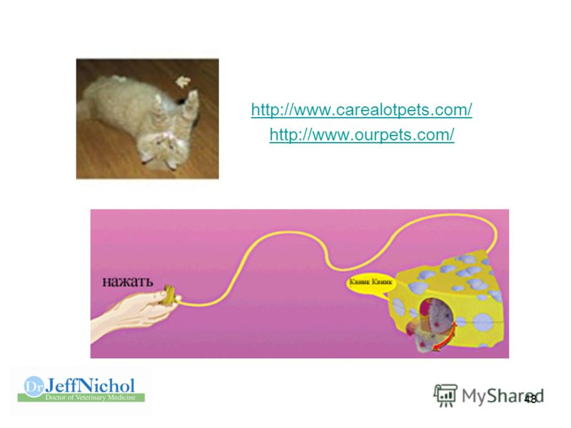 48 http://www.carealotpets.com/ http://www.ourpets.com/