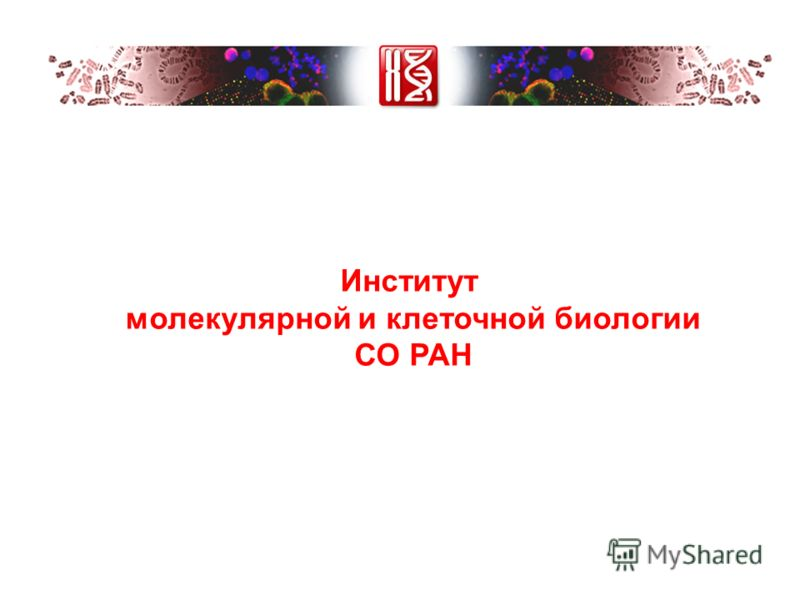 Институт молекулярной и клеточной биологии СО РАН