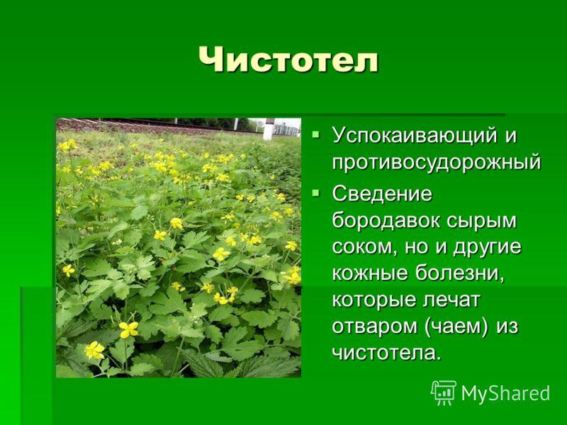 Для этого выбираем здоровые молодые растения, выкапываем их из земли вместе с корнями, которые тщательно очищаем и моем.